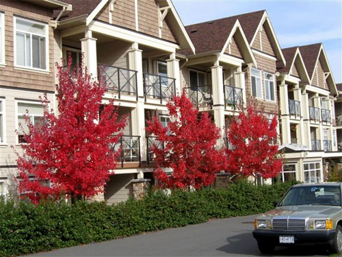 Legion Manor building with bright red leaves on trees
